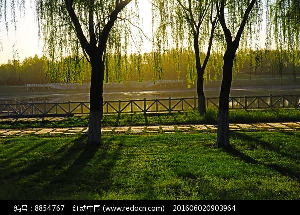 河畔柳树与草地上的倒影图片