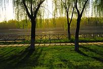 河畔柳树与草地上的倒影