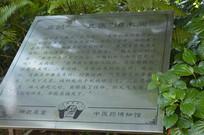 扁鹊雕像文字介绍