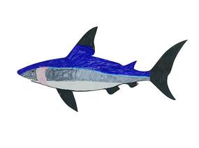 卡通彩色鲨鱼