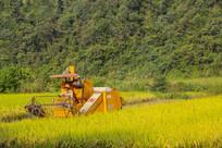 山村秋稻收割