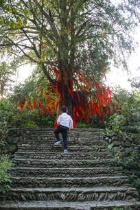 孩童许愿树