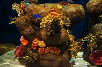 海洋生物博物馆海底世界