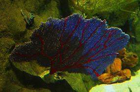 海洋生物博物馆海洋标本