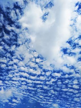 一层层积云