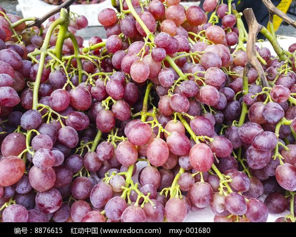 玛瑙红葡萄图片
