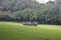 奔跑的马石雕雕塑绿树大草坪