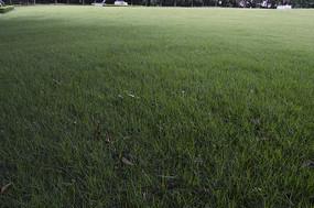 草坪绿草地青草地
