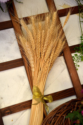 成熟的麦穗