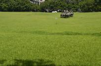 大草坪实拍图