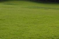 公园大草坪