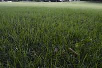 公园绿草地
