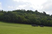 广州雕塑公园的大草坪景观