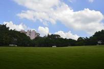 蓝天白云树木大草坪