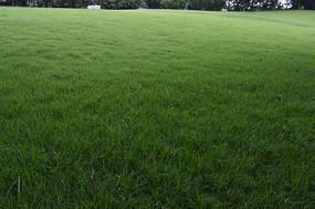 绿油油的大草坪草地