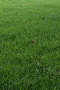 平整绿化草坪草地