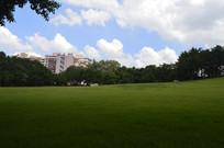 晴空绿植大草坪