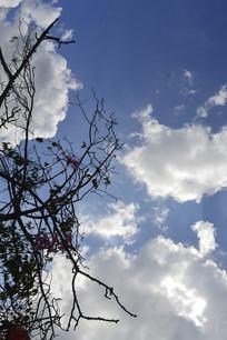树木蓝天云朵