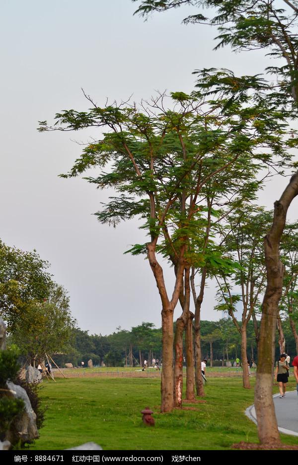 天空草坪树木风景图片