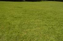 休闲休憩场地绿草坪