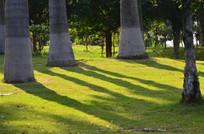 草地上的大树树影