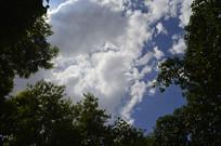 晴空树木风景