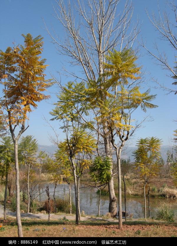 秋天的郊外美景图片