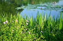 湿地湖泊花草风景