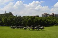 奔跑的马群青铜雕塑