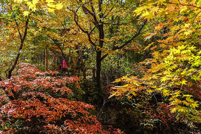 彩色的树林