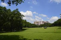 草地蓝天白云树木掩映的建筑