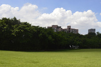 公园大草坪上的风景