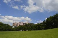 公园大草坪上的景色