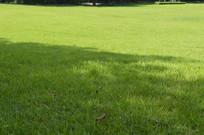 公园休闲绿草坪