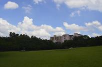 广州雕塑公园草坪风景