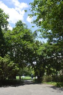 林荫路绿化景观