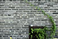 青砖墙植物