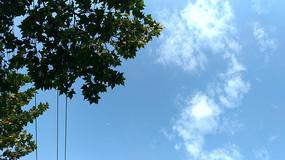 仰望蓝天下的树木枝叶