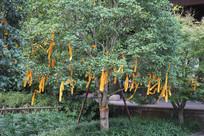杭州六和塔许愿树