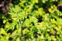 好看的绿色树叶