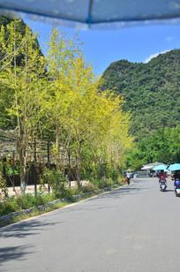 青山绿树道路风景