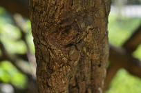 不知名的树木树干