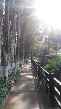 林间小路风景