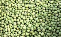 绿色大豆高清图