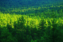 绿色的林海