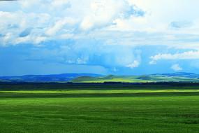 绿色的麦田风景