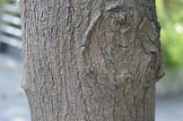 树干特写图片
