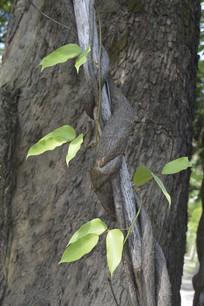树干与藤蔓植物