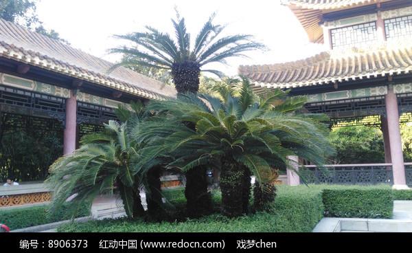 庭院里的绿树
