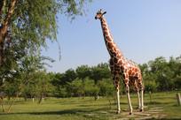 长颈鹿雕刻